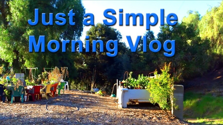 Quiet Vlog in the Garden, Container Gardening, Compost in Place System has Zucchini growing all Year