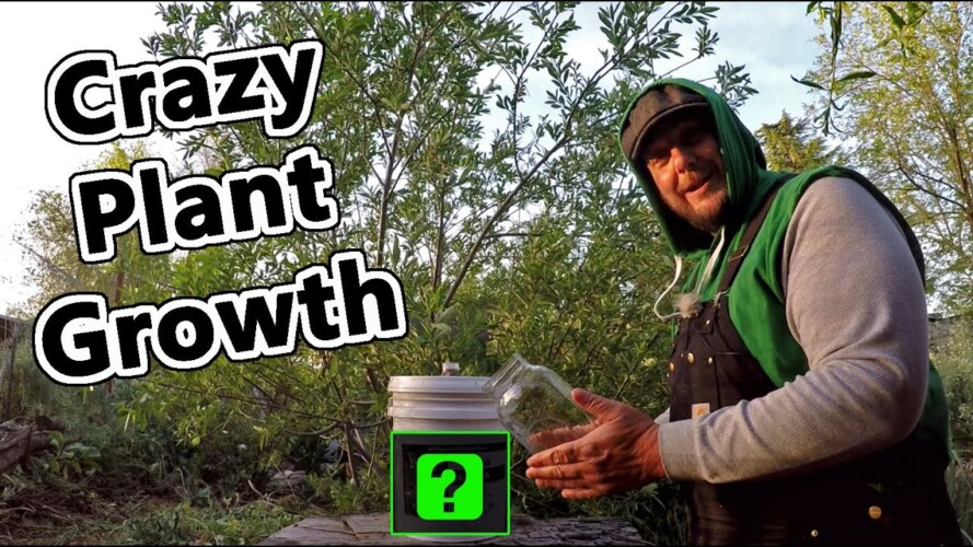 This One Simple Gardening Trick Will Make Your Plants Grow Like Crazy !!!