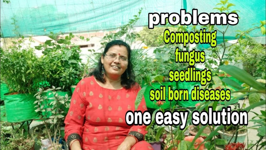 Gardening ki bahut sari problems ka 1 Solution_Waste decomposer 5 uses