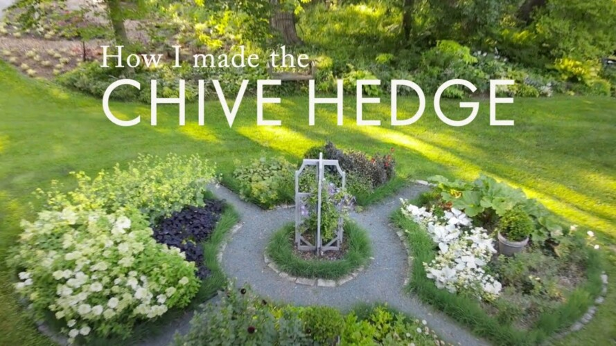 How to make a chive hedge 🌿 Edible + ornamental gardening