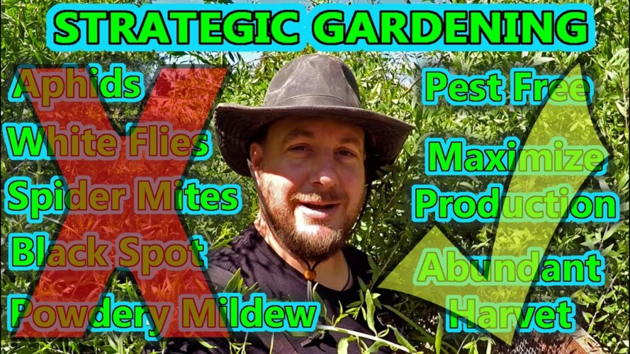 These Successful Gardening Strategies Will Change The Way You Garden Forever!