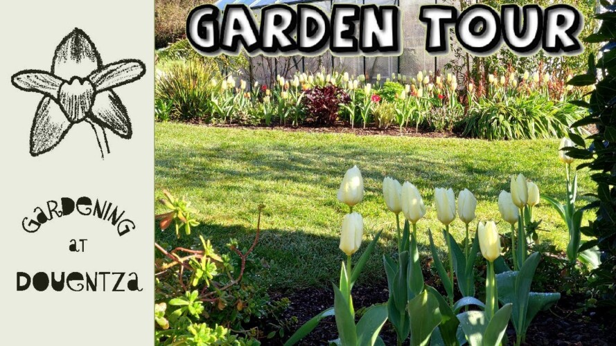 Tulips, Peonies & More | Irish Country Garden Tour | April Stroll & Gardening Chat