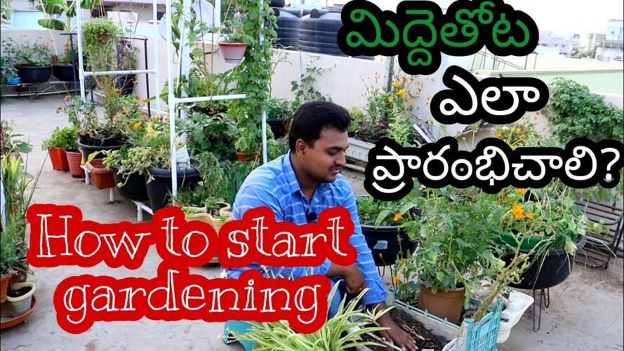 మిద్దెతోటని ఎలా మొదలు పెడితే బాగుంటుంది? How to start terrace gardening