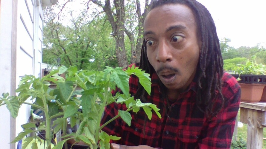 THE EASIEST WAY TO GROW TOMATOES FOR YOUR GARDEN | Easy Gardening For Beginners & Experts #withme