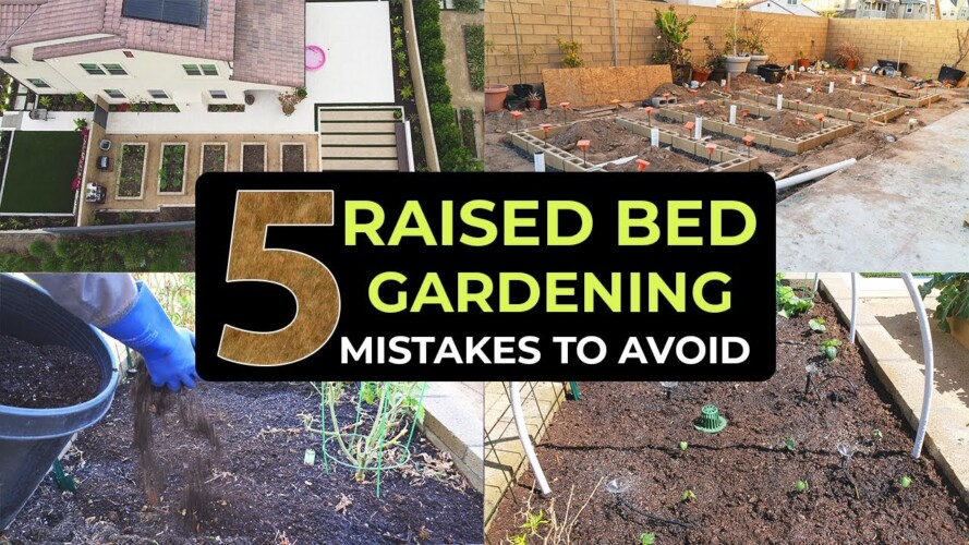 Top 5 Raised Bed Gardening Mistakes To Avoid - Garden in Raised Beds Effectively!