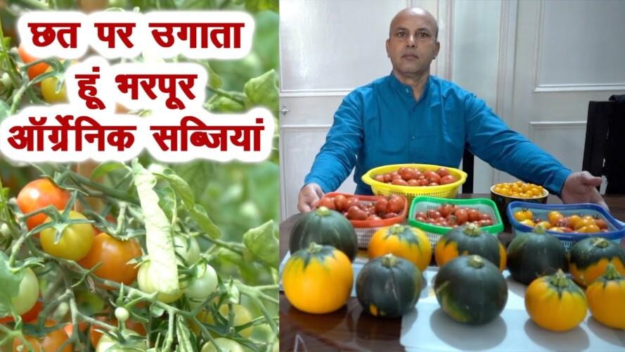 गर्मियों में छत पर उगाई पौष्टिक ऑर्गेनिक सब्जियां, बंपर Harvesting, आप भी उगाएं, Kitchen Gardening