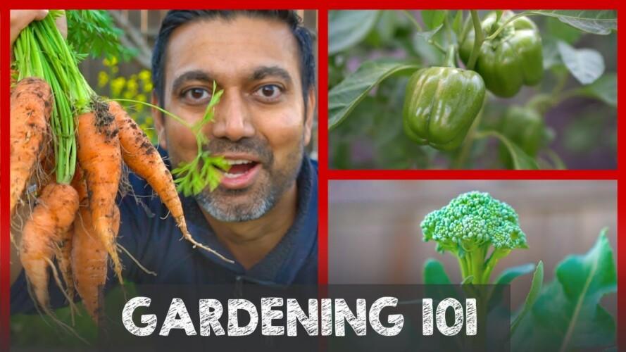 Gardening 101: Complete Guide to Start a Garden