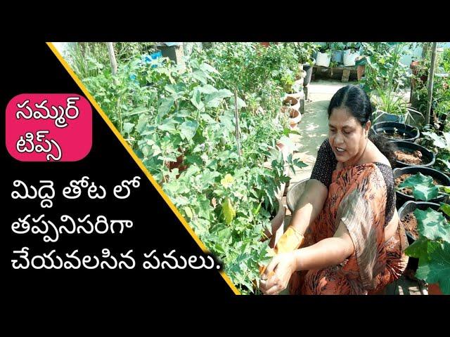 మిద్దె తోట లో రొటీన్ పనులు | gardening rotein works | gardening works.