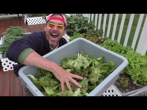 May GARDEN Chores and TOUR Good Container Gardening Tips Pest Bugs Control HARVEST Lettuce Kale