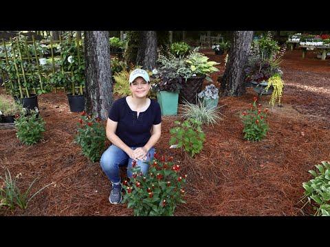 Trial Gardens Update & Nursery Tour | Gardening with Creekside