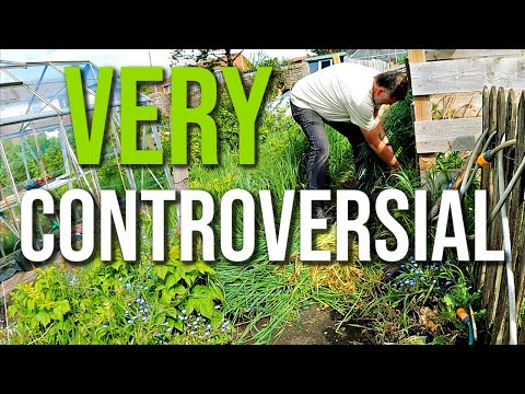 What Do You Think? Allotment Gardening With Tony