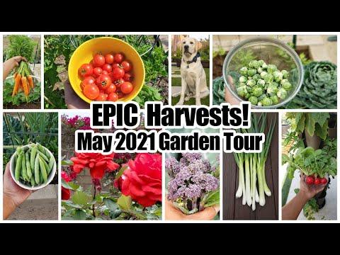 EPIC Vegetable Harvests! Full Garden Tour & Gardening Tips!