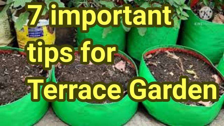 7 Important tips for terrace gardening।। छत पर बागवानी के लिए 7 महत्वपूर्ण बातें