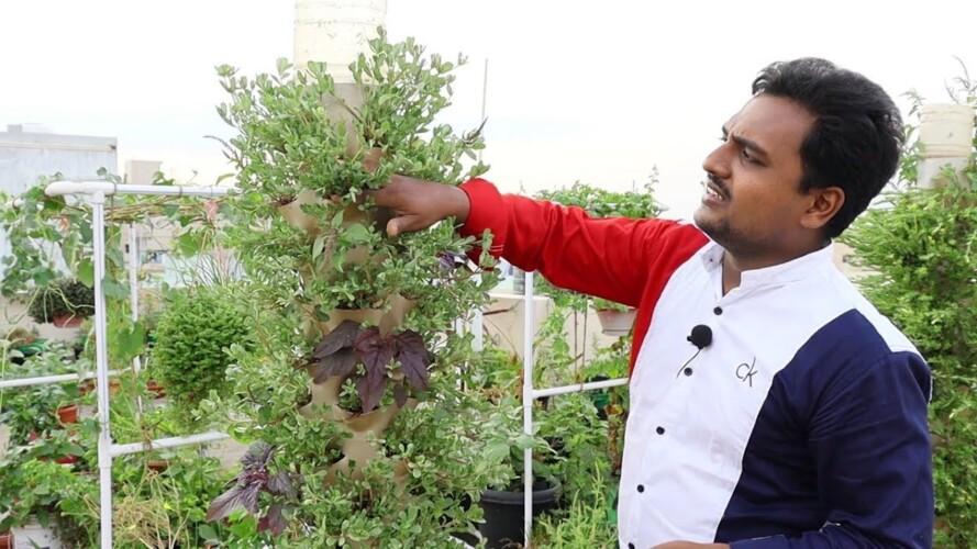కొత్తగా గార్డెనింగ్ చేసే వాళ్ళు ఈ కూరగాయలు పెంచుకుంటే బాగుంటుంది Vegetables to grow #gardening