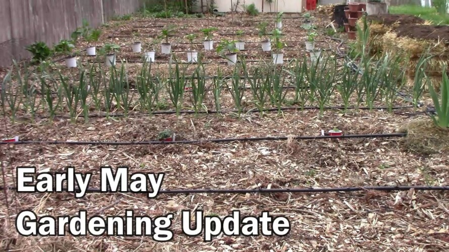 Early May Gardening Update - It's Time To Plant Tomatoes and Peppers
