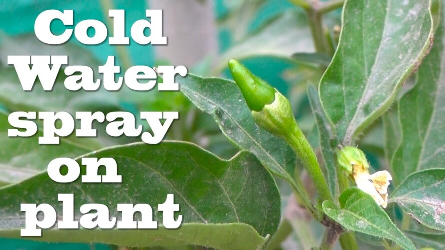 Coldwater Pest Control | and Treatment | Free Ka Pesticide Banao | at Kitchen Gardening