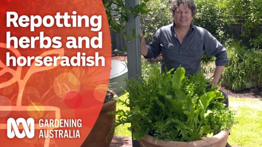 Refresh and repot an overgrown herb garden | Growing fruit and veg | Gardening Australia
