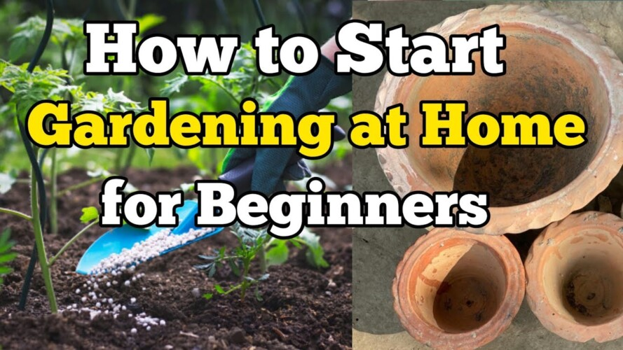 How to start Gardening at Home for Beginners | घर पर बागवानी कैसे शुरू करें | Part 1