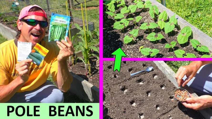 EZ way to Grow BEANS and CUCUMBERS and ZUCCHINI square foot gardening in containers garden at home