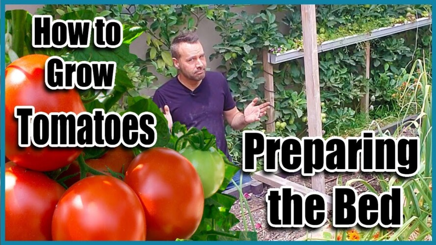 How To Grow Tomatoes - Preparing the Bed