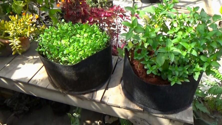 Container Gardening & Kitchen Herbs   Simple Gardening for Everyone   Jo Karna Hai Khud Karo