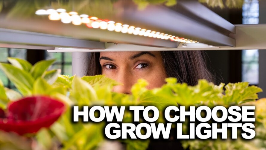 What I wish I knew about grow lights before I started gardening