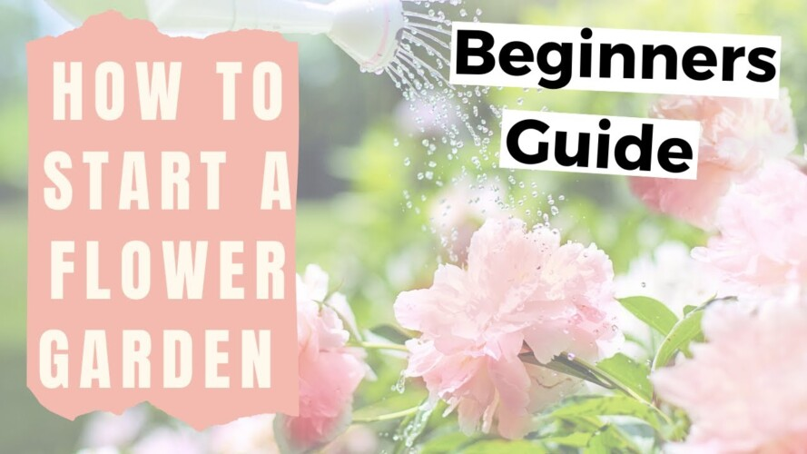 How to Start a Flower Garden for Beginners - Home Gardening for Beginners Flowers