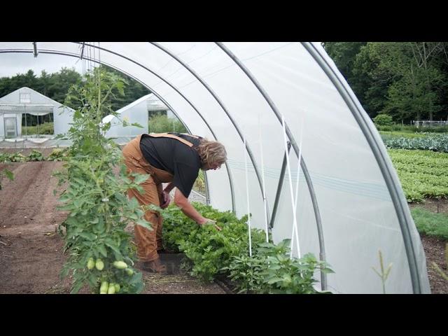 Gardening Basics - Growing Celery