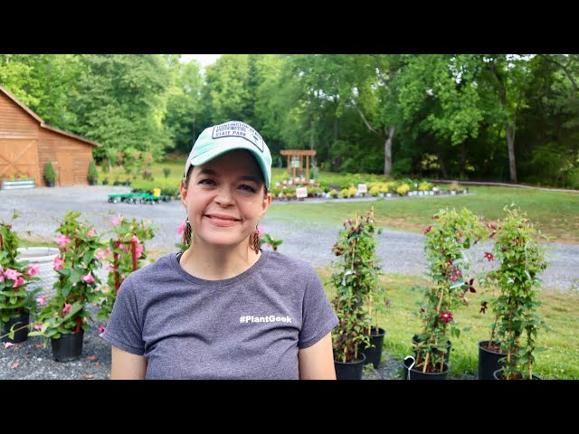 End of May Nursery Tour | Gardening with Creekside