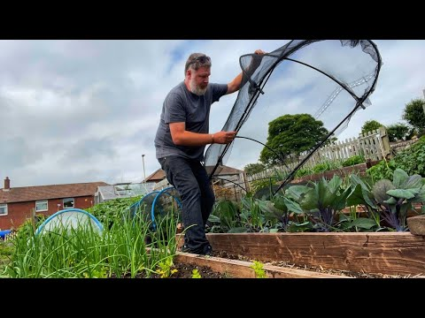 Growing A Vegetable I Have Never Heard Of | Allotment Gardening With Tony