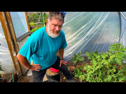 I Have Really Messed Up | Allotment Gardening With Tony