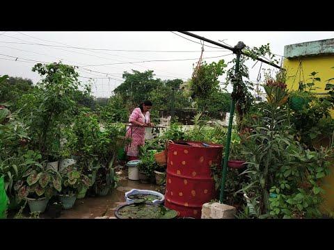 Changing Terrace Garden Settings n final look | Gardening Vlog in hindi