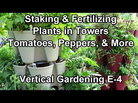Vertical Gardening: Staking Tomatoes, Peppers &  More - Water Soluble Fertilizing & Worm Casting Tea