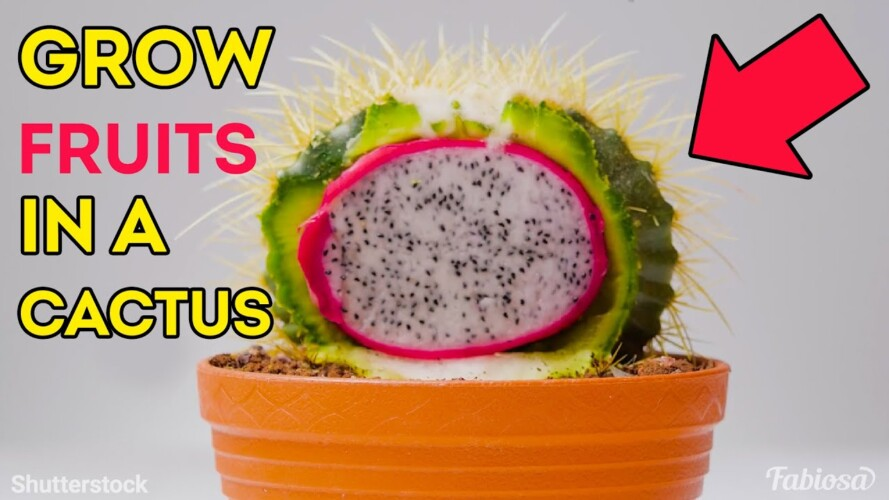 How to grow exotic fruits at home | Epic gardening in your kitchen