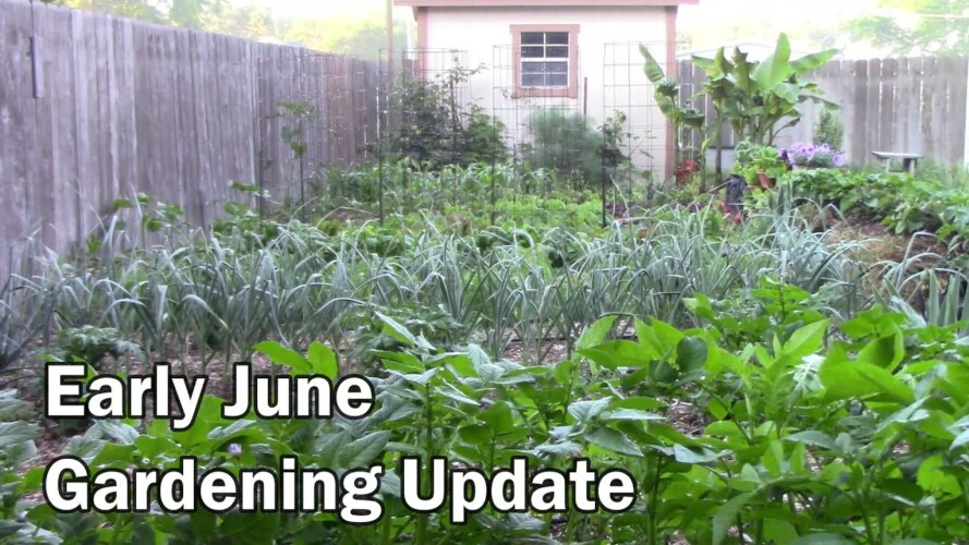 Early June Gardening Update and Tour - Lots of Peppers On and Growing
