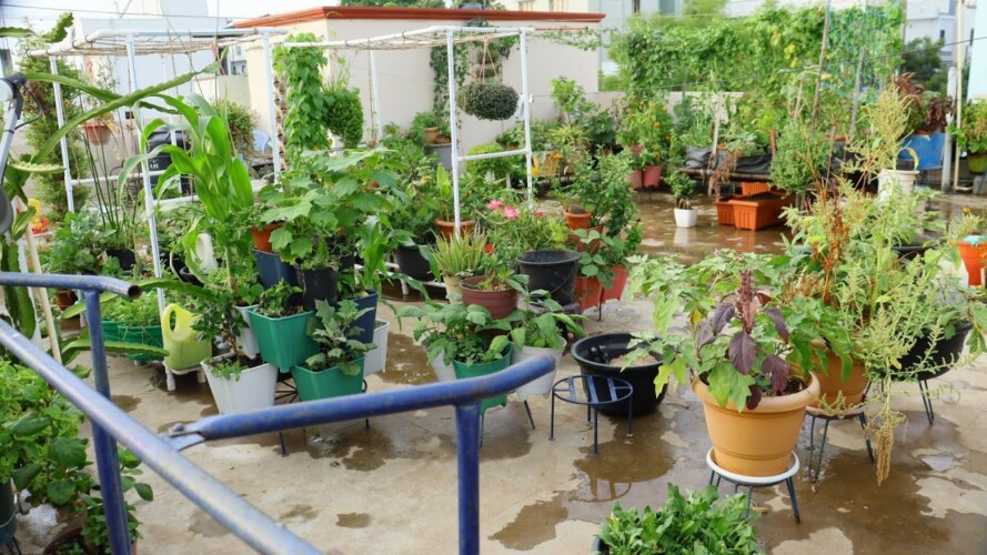 My garden Tour ఇప్పుడు మా మిద్దెతోట ఇలా ఉంది #gardening