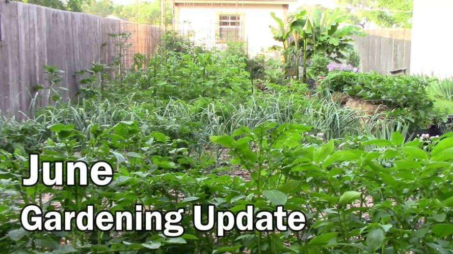 June Gardening Update and Tour - Lots of Tomatoes and Peppers Setting