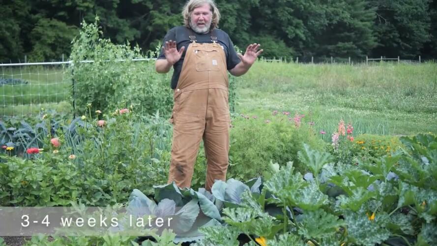 Gardening Basics - Growing Cabbage