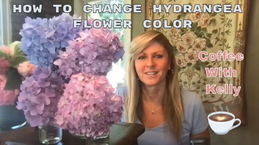 Gardening Hacks | How to Change Hydrangea Flower Color