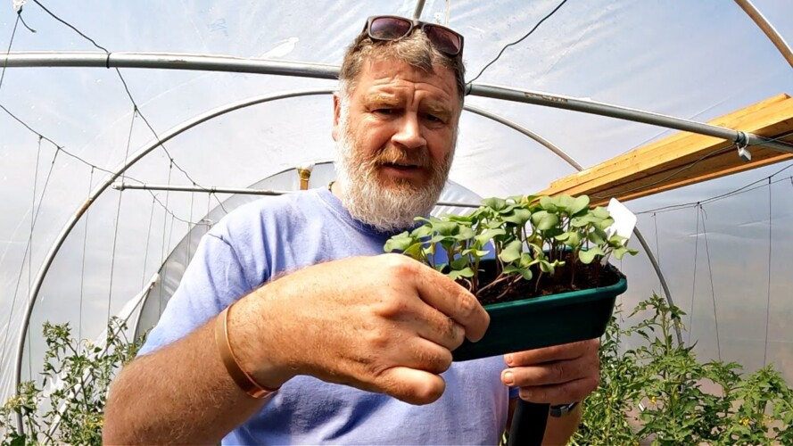 Are These Plants Really Worth All The Hassle - YES! | Allotment Gardening With Tony