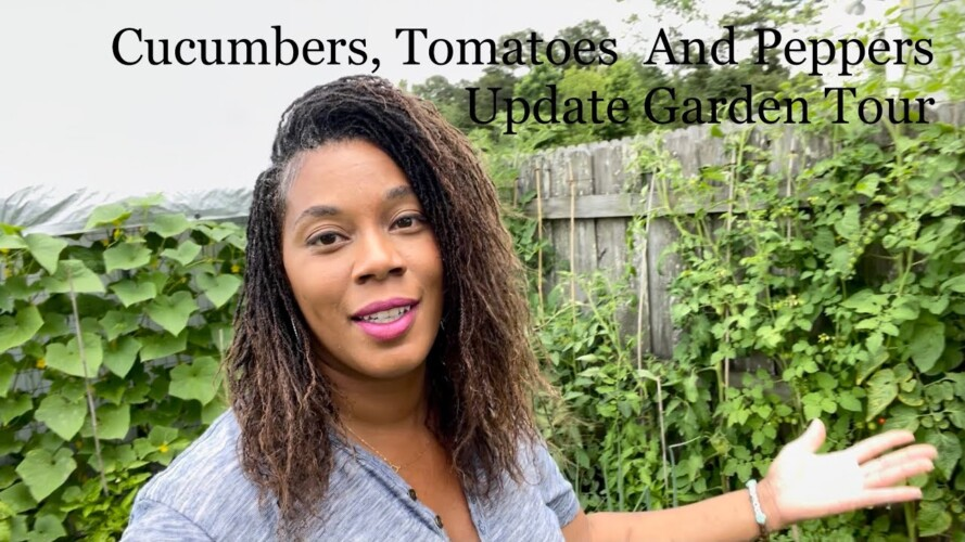 Tomatoes Peppers Cucumber Update Garden Tour Gardening 2021