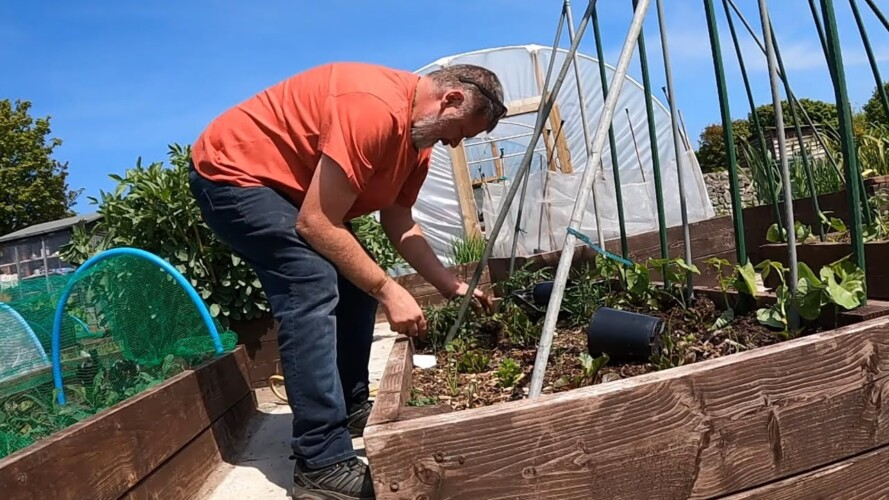 Space Saving Garden Tip and Advice | Allotment Gardening With Tony