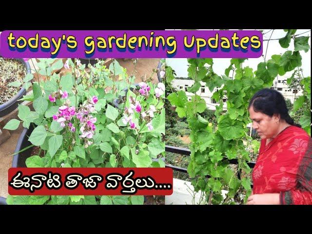 gardening updates   midde thota updates   gardening tips   terrace gardening updates.