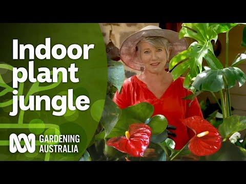 The Jungle Within | Indoor plants | Gardening Australia