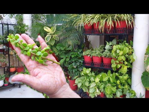 Common Plant Cuttings to Grow in Monsoon || Fun Gardening