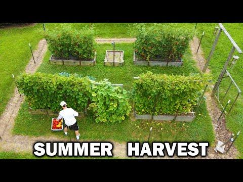Summer GARDEN HARVEST Relaxing Vegetable Gardening Frozen Food Storage