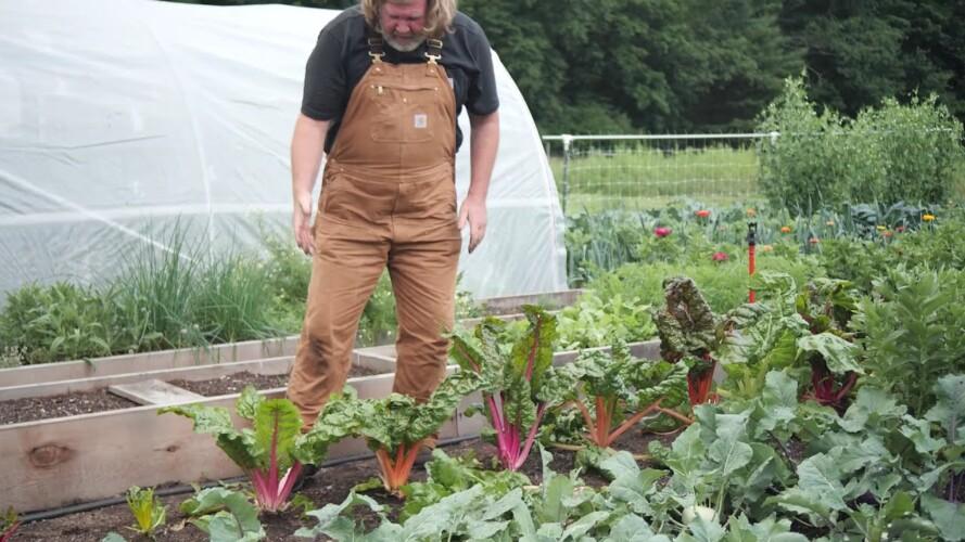 Gardening Basics - Growing Chard