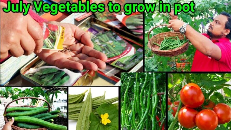 July Me Ugaiye Ye 10 Vegetables Gamle me~ Rainy Season Vegetables To Grow In Pots with full updates