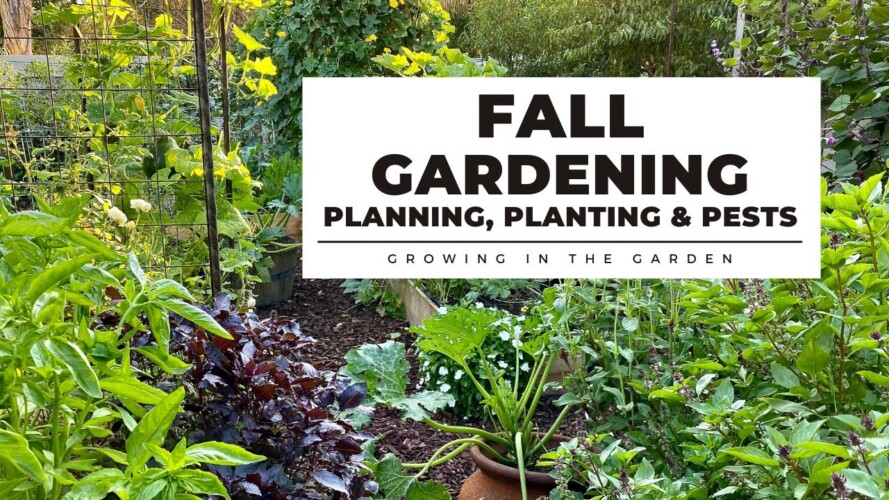 FALL GARDENING in HOT CLIMATES: PLANNING, PLANTING & PESTS