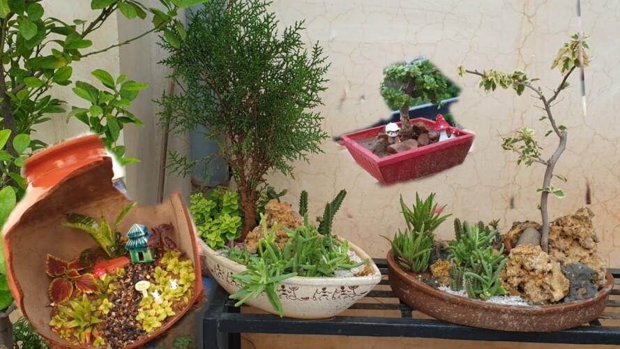 My Tray Garden Collection - Fun Gardening